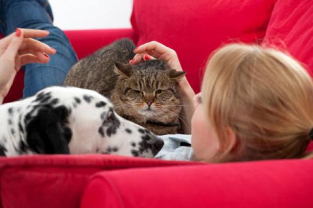 Online services are now facilitating with all the possible pet desires and services